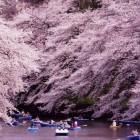 7 điểm tuyệt vời cho mùa hoa Anh Đào tại Tokyo